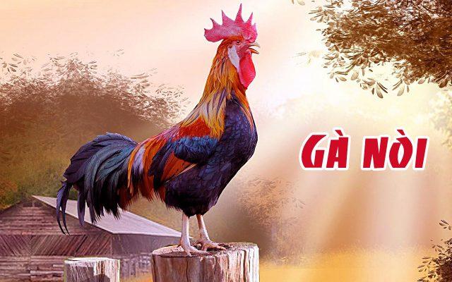 Hình ảnh con gà nòi