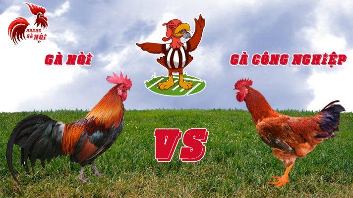 Theo bạn thịt gà nòi hay gà công nghiệp ngon hơn