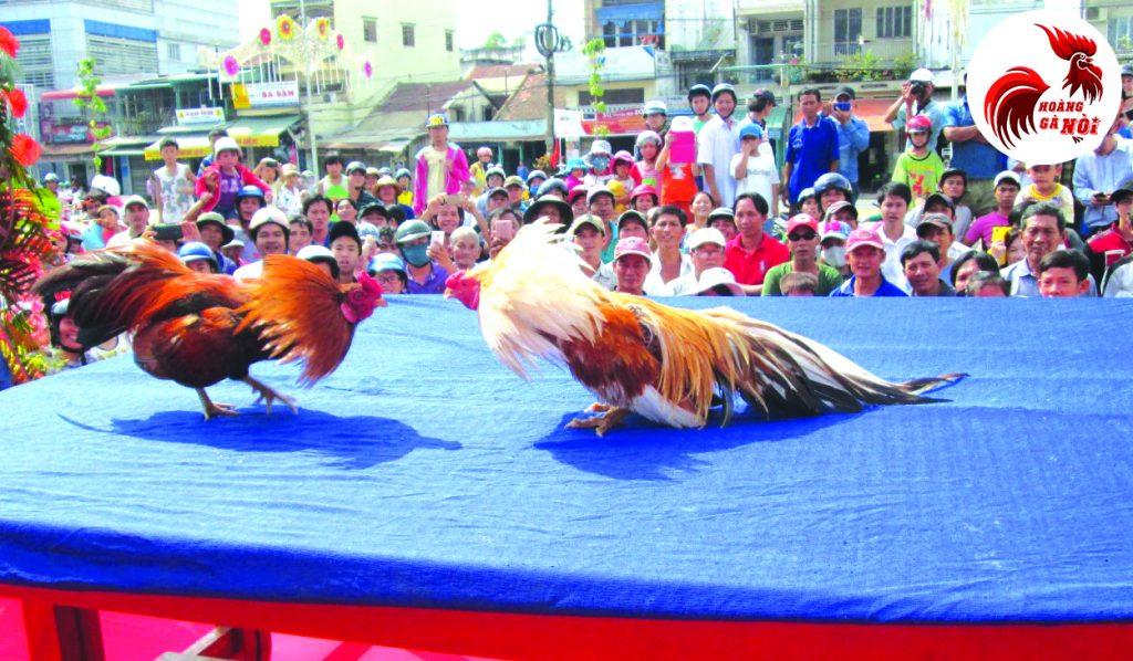 Lễ hội đá gà