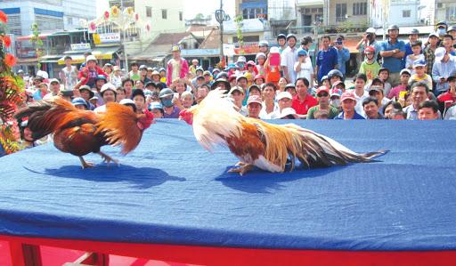 lễ hội chọi gà